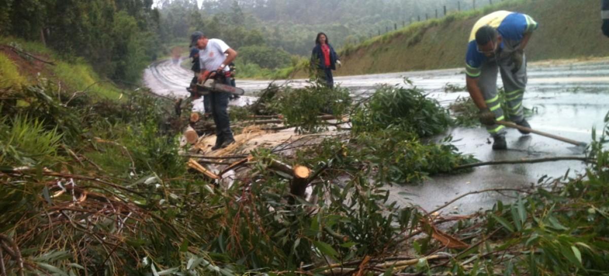 Fortes ventos derrubam árvore na Rod. das Estâncias