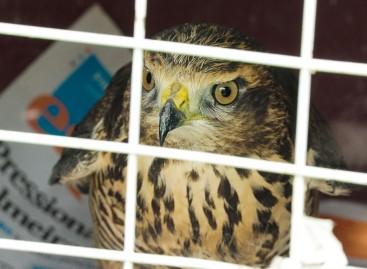 Guarda Ambiental de Itatiba solta mais de 60 animais silvestres