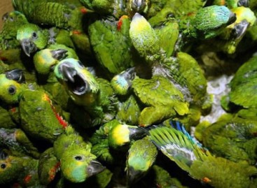 Polícia Federal deflagra operação contra tráfico de aves