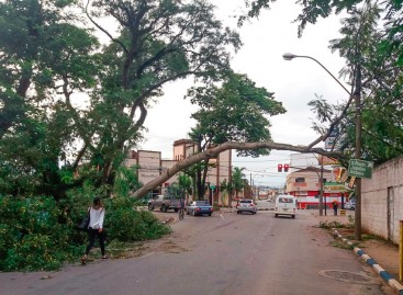 Queda de árvore interdita Av. Marechal Deodoro, em Itatiba