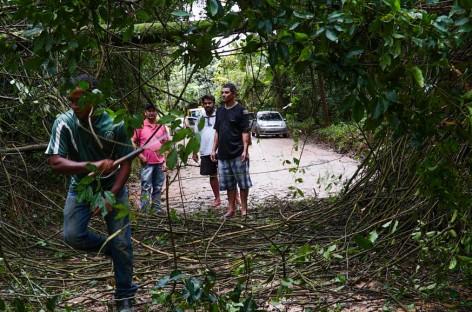 Galhos de árvores caem e interditam acesso ao Bairro Terras de São Sebastião
