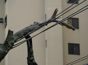 Galho de árvore cai e bloqueia Avenida da Saudade