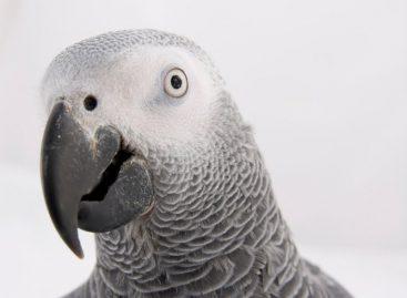 65ª edição do Campeonato Brasileiro de Ornitologia Amadora vai até este sábado em Itatiba