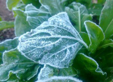 Itatiba registra 2ºC e geada prejudica produção de hortaliças