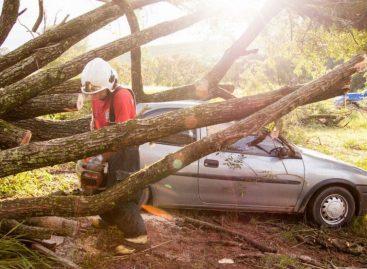 Temporal derruba árvore e carros são atingidos