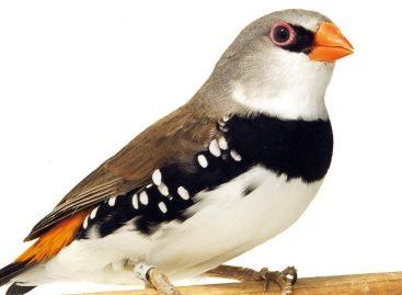 Itatiba recebe 2ª etapa do 66º Campeonato Brasileiro de Ornitologia