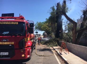 Vândalos queimam árvore centenária na Av. Marechal Deodoro