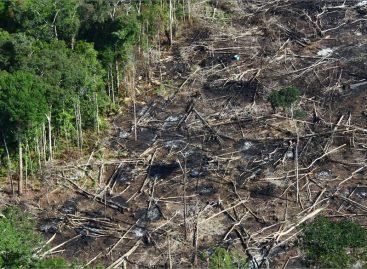 Desmatamento na Amazônia cai 16% em 12 meses, aponta estudo do Inpe