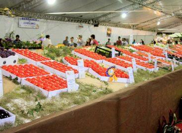 Primeiro final de semana movimenta população na 15ª Festa do Caqui