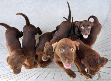 Feira de Adoção Animal acontece em Itatiba