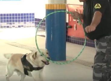 Cães da Defesa Civil e do Corpo de Bombeiros fazem apresentação em escola