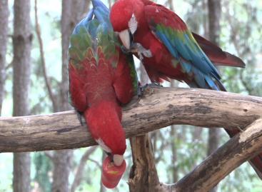 Zoológico em Itatiba oferece picolés aos animais neste verão