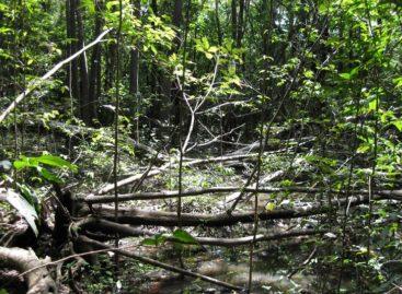Itamaraty: países ricos descumprem acordos para proteção ambiental