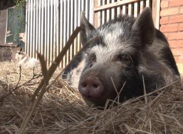 Santuário itatibense promove campanha de doação para causa animal