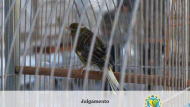 Campeonato Brasileiro de Ornitologia será virtual